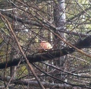 Elfin antics in the forest