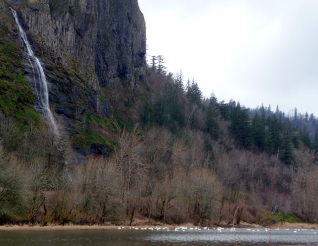 Tundra swans and unnamed waterfall